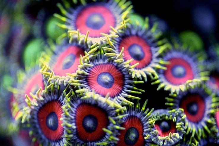 corals-5[6]