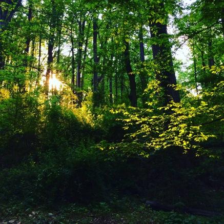 woods.1