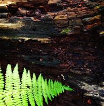 woods.4