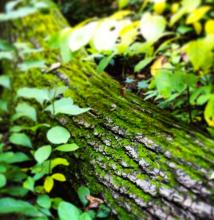 woods.5