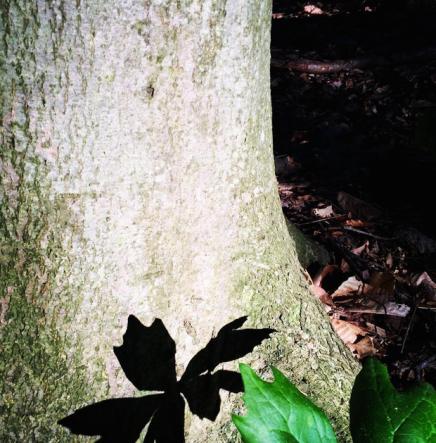 woods.6