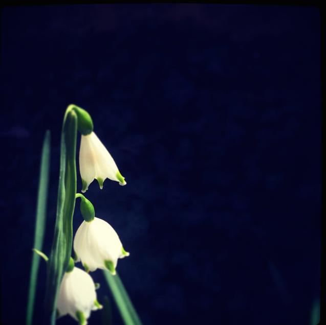 sad.flower