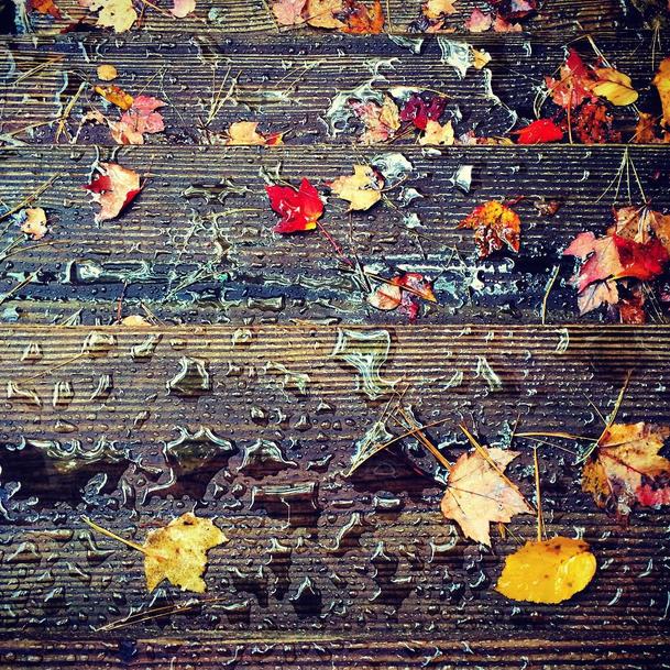 wet.leaves
