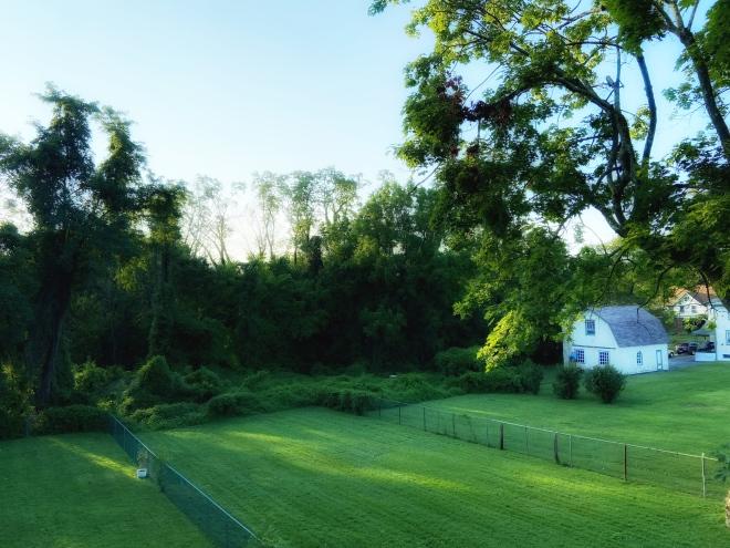 ebbs_backyard