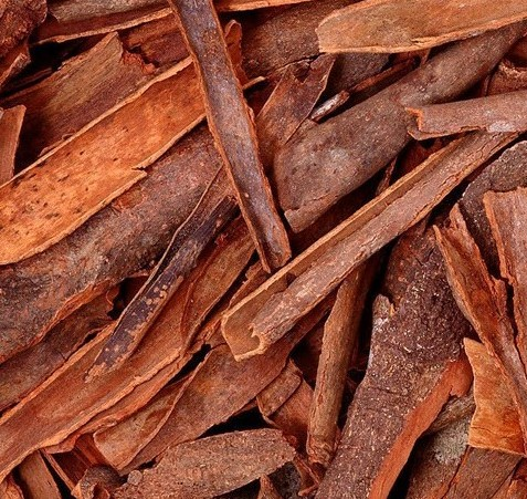 A detail of cinnamon bark, used to create essential oils.