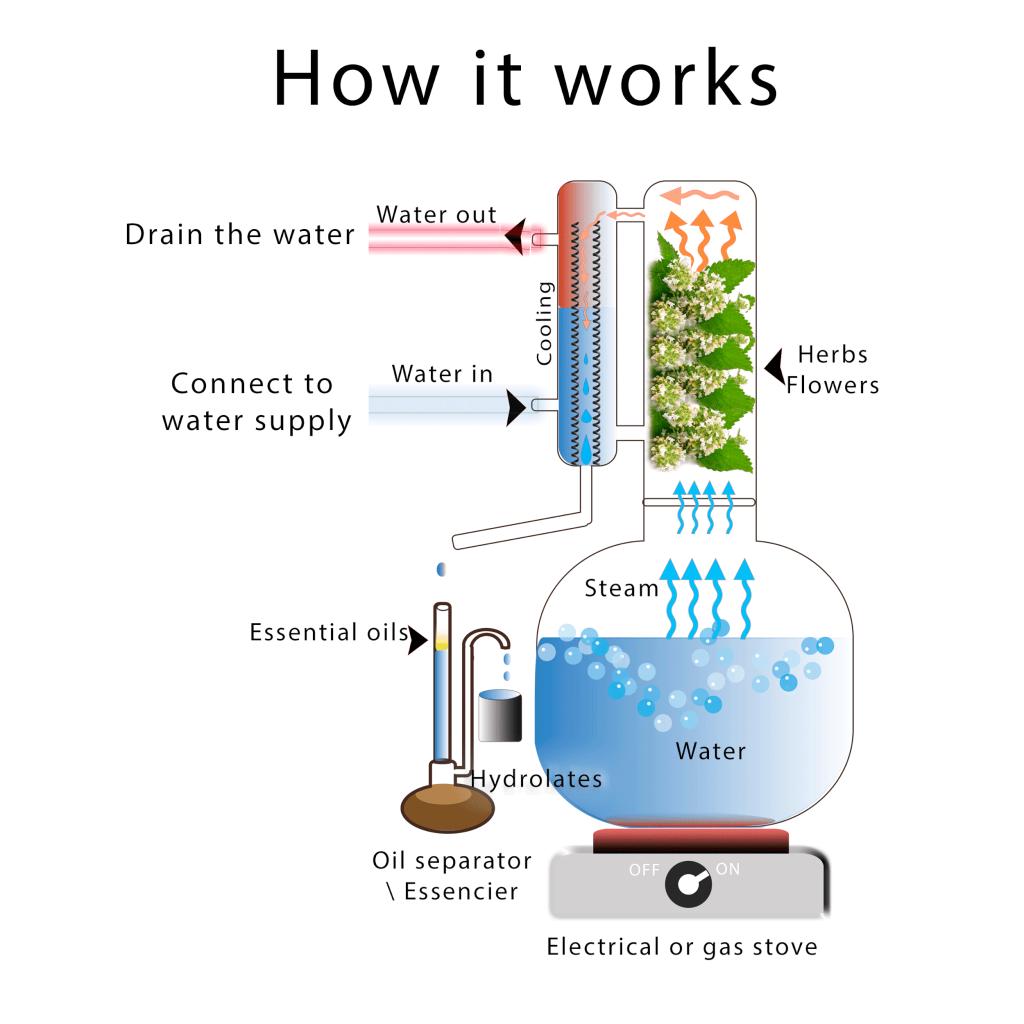 A diagram of a distiller used for distilling essential oils.